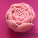 Gėlės pumpuras